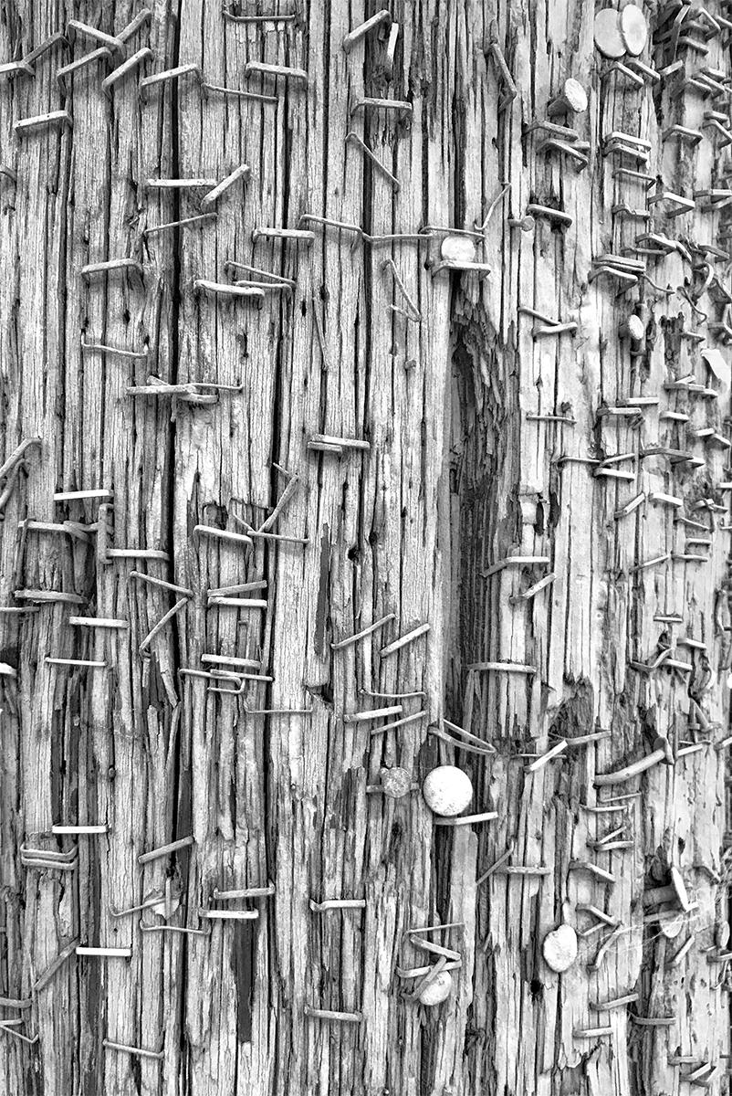 Staples on Wood